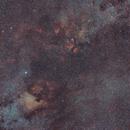 The Cygnus Constellation,                                Vencislav Krumov