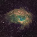 Lower's Nebula - Sh2-261 - SHO,                                Andrew Harrell