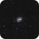 NGC 7479 in Pegasus,                                Steve Milne