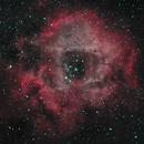The Rosette Nebula (2021),                                Daniel Tackley