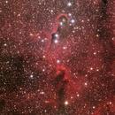 vdb142 Elephant Trunk Nebula,                                Byoungjun Jeong