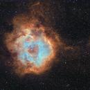 Rosette Nebula,                                ashley