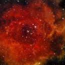 Rosette Nebula,                                Jeremy Miller