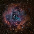 Rosette Nebula (NGC2244),                                Ivan Hancock