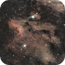 Pelican Nebula -  IC 5067,                                Alessandro Iannacci