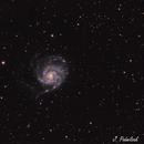 M101 Galaxy,                                Jocelyn Podmilsak