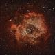 NGC 2237, NGC 2238, NGC 2239, NGC 2246,  NGC 2244,                                K. Schneider