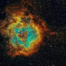 Caldwell 49 Rosette Nebula in HST Palette,                                Wang-hua Li, Mack