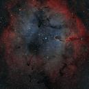 Elephant Trunk Nebula,                                Gabe Shaughnessy