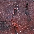 IC1396,                                Carlos Burkhalter