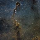 IC 1396 Elephant Trunk,                                Brian Blau