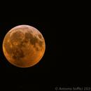 Lunar Eclipse 21 Jan 2019 - maximum eclipse,                                Antonio Soffici