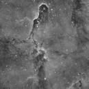 IC 1396A Elephant`s Trunk Nebula Ha,                                Gebhard Maurer