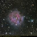 Cocoon-Nebula,                                Michael Fürsatz