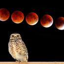 The Owl and the Lunar Eclipse,                                Odilon Simões Corrêa