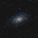 M33,                                Bradicus