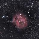 C19 Cocoon Nebula,                                Ian Zedalis