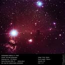 The Horsehead nebula,                                FCurti
