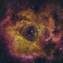 The Rosette Nebula - Caldwell 49 - NGC2244,                                Phil Swift