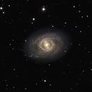 M95 - Ringed Spiral Galaxy,                                Timothy Martin & Nic Patridge