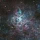 NGC 2070 - Tarantula Nebula - Jul 2018 v2,                                Martin Junius