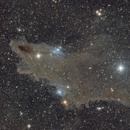 """The Night of the Dark Shark Nebula""  LDN 1235,                                Brandon Tackett"