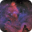 NGC2264 NGC 2264 The Cone Nebula,                                Peter Webster