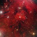 NGC 1999 and surroundings *** AAPOD2 26.04.2020 ****,                                Ruben Barbosa