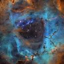 The Rosette Nebula and NGC 2244 (Hubble Palette),                                Bogdan Jarzyna