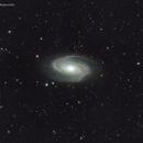 M81,                                Jay Sottolano