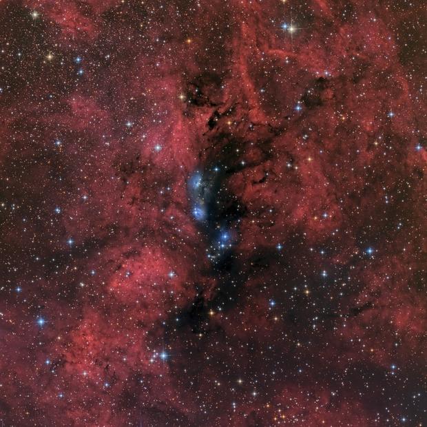 NGC6914 - a lovely mix of emission, reflection and dark nebulosity,                                Rick Stevenson