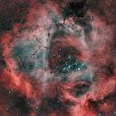 Rosette Nebula,                                AstroBadger