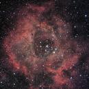 Rosette Nebula,                                starfield