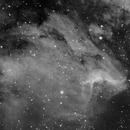 Pelicano Inviernas 150523,                                Fomalhaut