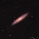 Sculptor Galaxy (NGC 253),                                Todd