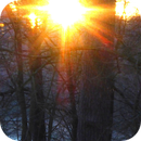 Sunset on Christmas Eve,                                Bruno
