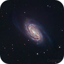 NGC 2903,                                Shannon Calvert