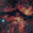 LDN889 Dark Nebula in Cygnus,                                Randal Healey