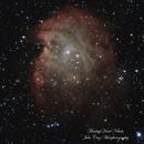 The Monkey Head Nebula - Subtle,                                Julio Cruz