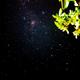 Nebulosa Eta Carine,                                Leandro Bianchini