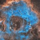 Rosette Nebula NGC 2244,                                NelsonAstrofoto