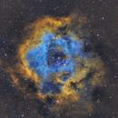 NGC2244 Rosette Nebula,                                Turki Alamri