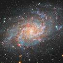Galassia del Triangolo (M33),                                Michele Campini