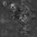 Cygnus,                                Tarun Kottary