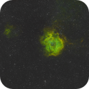 NGC 2237 - Rosette Widefield,                                Kyle Pickett