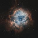 NGC 2244 - Rosette Nebula,                                TristanDt