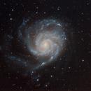 M101 Pinwheel Galaxy,                                Robin Livermore