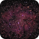 IC 1396 - open cluster with nebulosity,                                Tom Gray