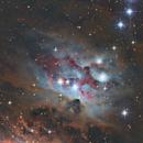 NGC 1977 Running Man Nebula,                                Chris Fellows