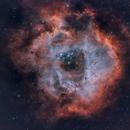 Rosette Nebula,                                Nigel Arnold